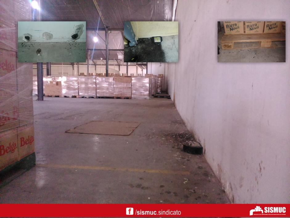 Denúncia: Central de Abastecimento infestada de ratos e pombos